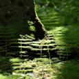 Kasveja ja yksityiskohtia Mustilasta, kesä 2012.